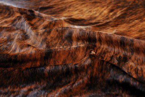 WILD peau de vache Brindle zoom
